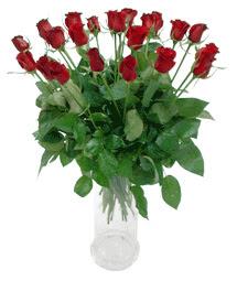 Muş çiçekçi telefonları  11 adet kimizi gülün ihtisami cam yada mika vazo modeli