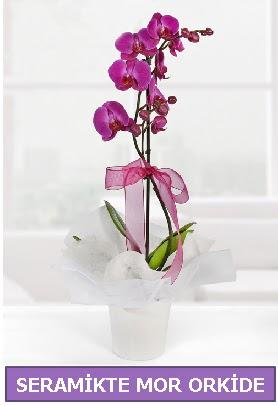 Seramik içerisinde birinci kalite tek dallı mor orkide  Muş İnternetten çiçek siparişi