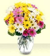 Muş internetten çiçek siparişi  mevsim çiçekleri mika yada cam vazo