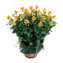 Muş cicekciler , cicek siparisi  10 adet sari gül tanzim cam yada mika vazoda çiçek
