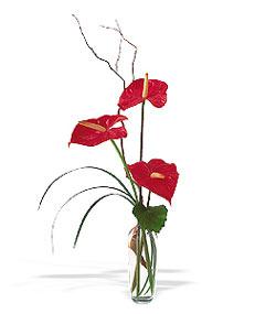 Muş çiçek siparişi sitesi  cam yada mika Vazoda 3 adet  antoryum