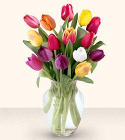 Muş çiçekçiler  13 adet cam yada mika vazoda laleler