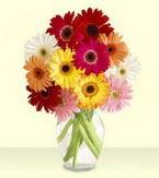 Muş çiçek yolla , çiçek gönder , çiçekçi   cam yada mika vazoda 15 özel gerbera