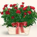 Muş İnternetten çiçek siparişi  11 adet kirmizi gül sepette