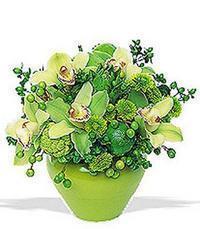 cam yada mika vazoda 5 adet orkide   Muş online çiçekçi , çiçek siparişi