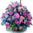 karisik mevsim kir çiçekleri  Muş çiçek gönderme sitemiz güvenlidir
