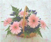 gerbera çiçeklerinde sepet   Muş çiçek yolla