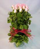 13 adet pembe gül silindirde   Muş çiçek yolla