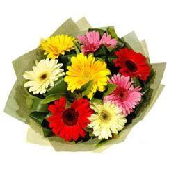 9 adet karisik gerbera demeti  Muş çiçek mağazası , çiçekçi adresleri