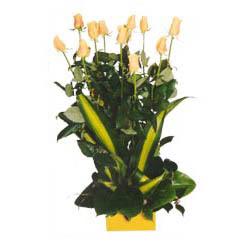 12 adet beyaz gül aranjmani  Muş kaliteli taze ve ucuz çiçekler