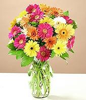 Muş çiçek online çiçek siparişi  17 adet karisik gerbera