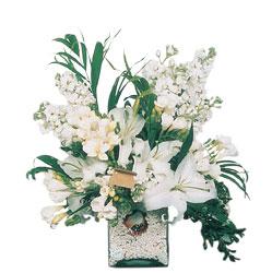 Muş internetten çiçek siparişi  sadece beyazlardan olusmus mevsim cam yada mika tanzim