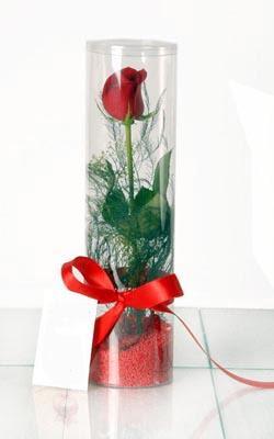 Muş çiçek yolla  Silindir vazoda tek kirmizi gül