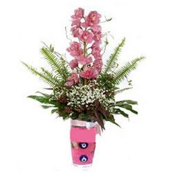 Muş hediye çiçek yolla  cam yada mika vazo içerisinde tek dal orkide çiçegi
