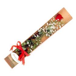 Muş çiçek , çiçekçi , çiçekçilik  Kutuda tek 1 adet kirmizi gül çiçegi