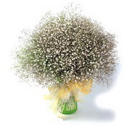 Muş çiçek mağazası , çiçekçi adresleri  cam yada mika vazo içerisinde cipsofilya demeti
