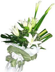 Muş güvenli kaliteli hızlı çiçek  3 dal kazablanka çiçegi ve yesillikler