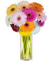 Muş internetten çiçek siparişi  Farkli renklerde 15 adet gerbera çiçegi