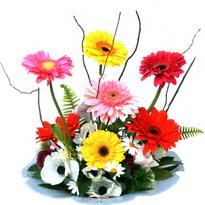 Muş hediye çiçek yolla  camda gerbera ve mis kokulu kir çiçekleri
