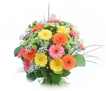 13 adet gerbera çiçegi buketi  Muş online çiçek gönderme sipariş