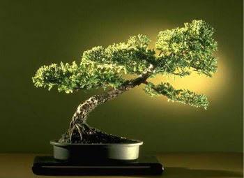 ithal bonsai saksi çiçegi  Muş çiçekçi mağazası