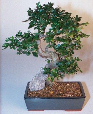 Muş çiçek gönderme sitemiz güvenlidir  ithal bonsai saksi çiçegi  Muş çiçek siparişi sitesi