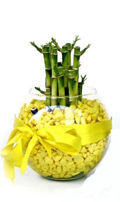 cam fanus içerisinde bambo  Muş internetten çiçek satışı