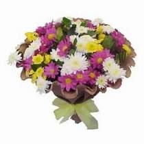 Muş çiçekçi telefonları  Mevsim kir çiçegi demeti