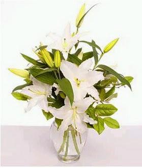 Muş çiçek gönderme  2 dal cazablanca vazo çiçeği