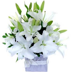 Muş çiçek yolla  2 dal cazablanca vazo çiçeği