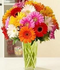 Muş çiçek servisi , çiçekçi adresleri  15 adet gerbera çiçek vazosu