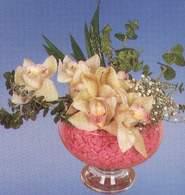Muş çiçek mağazası , çiçekçi adresleri  Dal orkide kalite bir hediye