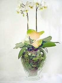 Muş çiçek satışı  Cam yada mika vazoda özel orkideler