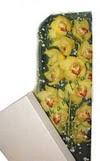 Muş çiçek gönderme  Kutu içerisine dal cymbidium orkide