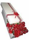 Muş çiçekçi telefonları  11 adet 1.kalite magnum güller