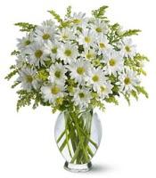 Vazo içerisinde beyaz krizantem çiçekleri  Muş çiçekçi mağazası