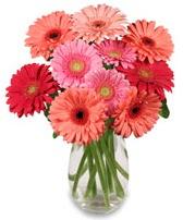 vazo içerisinde 13 adet gerbera çiçeği  Muş çiçek siparişi sitesi