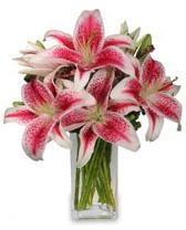 Vazo içerisinde 5 dal kazablanka çiçeği  Muş cicekciler , cicek siparisi