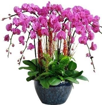 9 dallı mor orkide  Muş 14 şubat sevgililer günü çiçek