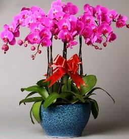 7 dallı mor orkide  Muş çiçek online çiçek siparişi