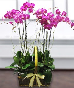 4 dallı mor orkide  Muş güvenli kaliteli hızlı çiçek