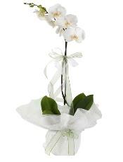 1 dal beyaz orkide çiçeği  Muş çiçek siparişi vermek