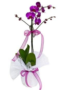Tek dallı mor orkide  Muş çiçekçi telefonları