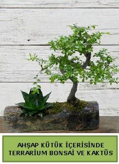 Ahşap kütük bonsai kaktüs teraryum  Muş internetten çiçek siparişi