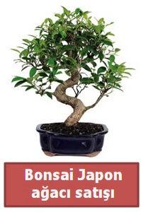 Japon ağacı bonsai satışı  Muş çiçek siparişi sitesi