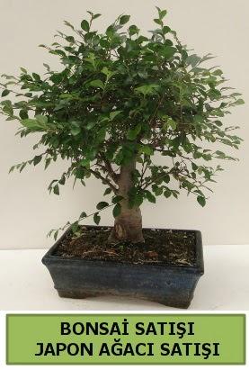 Minyatür bonsai japon ağacı satışı  Muş çiçek gönderme sitemiz güvenlidir
