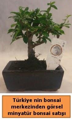 Japon ağacı bonsai satışı ithal görsel  Muş çiçek yolla