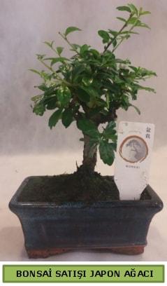 Minyatür bonsai ağacı satışı  Muş çiçek gönderme