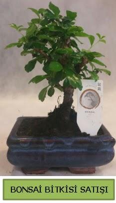 Bonsai ithal görsel minyatür japon ağacı  Muş ucuz çiçek gönder