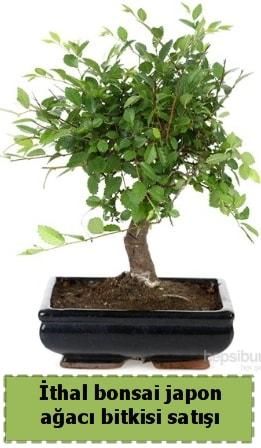 İthal bonsai saksı çiçeği Japon ağacı satışı  Muş İnternetten çiçek siparişi